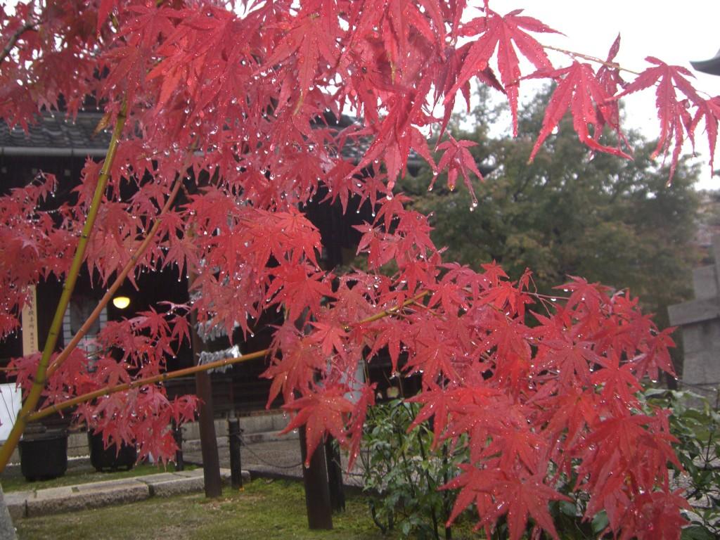 勝林寺2011・11・19